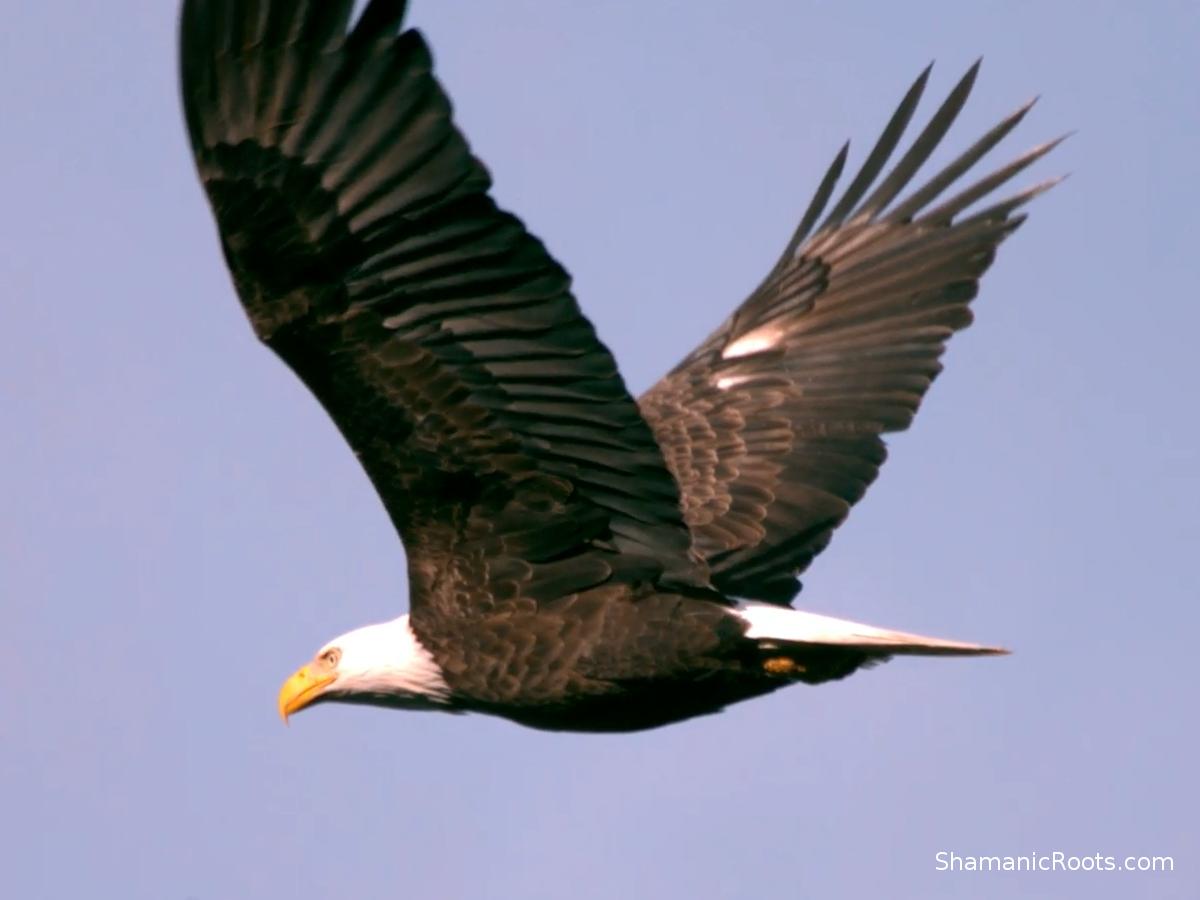 Eagle-helping-spirit